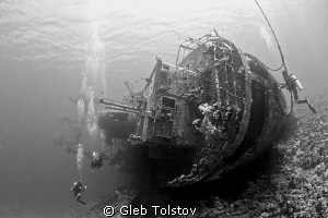 Cedar Pride by Gleb Tolstov