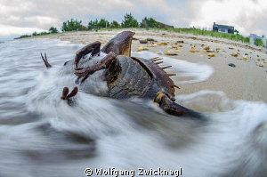 Horseshoe crab struggling on it´s way to the beach... by Wolfgang Zwicknagl