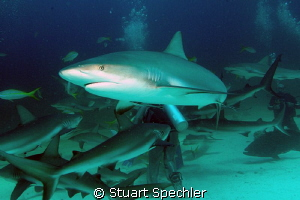 Fish for dinner again?  The shark feeders had just opened... by Stuart Spechler