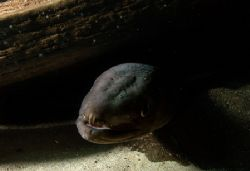 Conger eel. Fascinating marine life can also be found in ... by Grant Kennedy