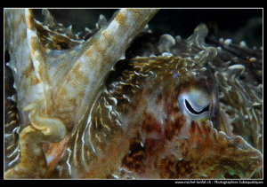 Cuttlefish encounter... :O)... by Michel Lonfat