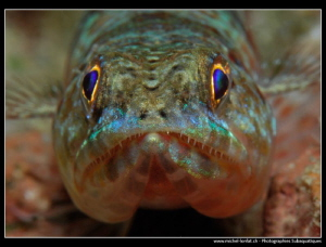 Face to face with a lizard fish... by Michel Lonfat