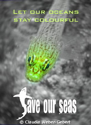 let our oceans stay bright by Claudia Weber-Gebert