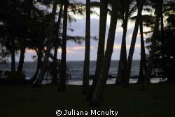 Hilo, Hawaii by Juliana Mcnulty