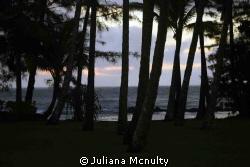 Hilo, Hawaii by Juliana Mcnulty