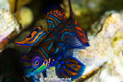 Burst Of Color! When on the search for a mate one must lo... by Marc Damant