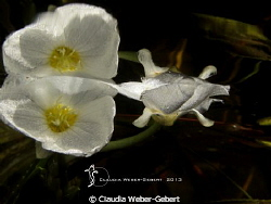 under the surface by Claudia Weber-Gebert