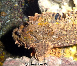 Stonefish - A very good reason not to go touching the ree... by Leon Van Zijl
