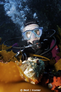 My diver model swam up this kelp wall and was confronted ... by Beat J Korner