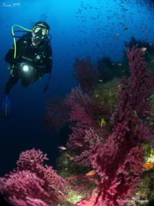 Med Sea atmosphere, 150 ft deep. by Stéphane Primatesta