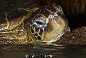 In a lava tube air bubble I surfaced to get a glimpse whe... by Beat J Korner