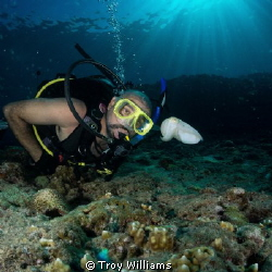 My buddy checking out 1 of 8 cuttlefish on our way out...... by Troy Williams