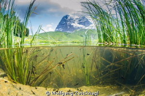 The Eiger North wall with a school of pollywogs - combini... by Wolfgang Zwicknagl