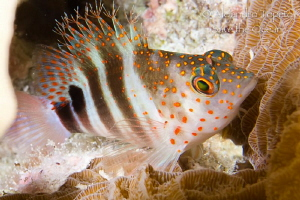 Fish with  red spots, Mahahual México by Alejandro Topete