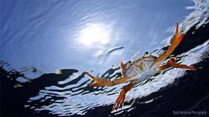Flying crab by Iyad Suleyman