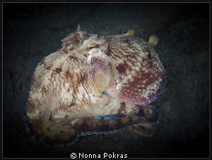 Small coconut octopus by Nonna Pokras