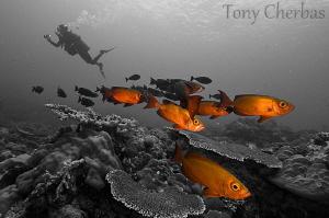 Big Eyes @ Ulong by Tony Cherbas
