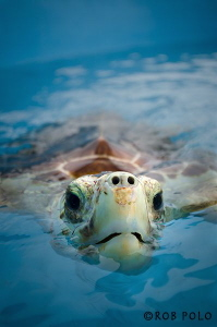 Turtle Portrait by Robert Polo