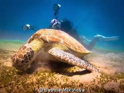 Girl and turtle by Babula Mikulova