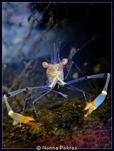 Smiling shrimp, G11 by Nonna Pokras