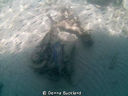 Scooter on the bottom, covered with sand and fish by Donna Buckland