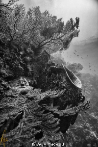 b/w conversion Coral and sponge by Arun Madisetti