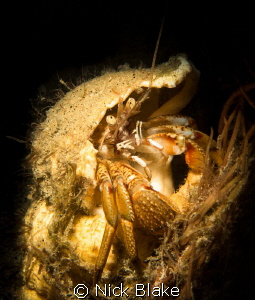 Hermit Crab at Selsey Lifeboat Station by Nick Blake