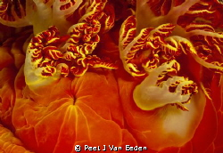 The petticoat of a Spanish dancer by Peet J Van Eeden