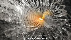 dancing feather worm ... by Claudia Weber-Gebert