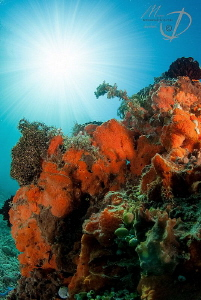 RED SUNNY CORALS by Mona Dienhart