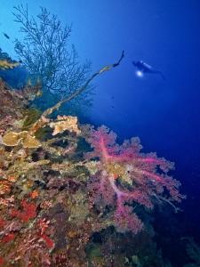 Bunaken marine park by Alex Varani