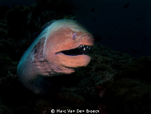monsters from the deep by Marc Van Den Broeck