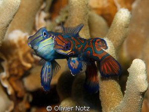 Very shy fishes. You have to wait in the dark and turn on... by Olivier Notz