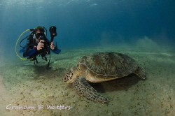 A diver taking a photo of a turtle by Graham Watters