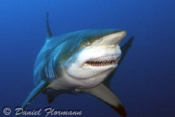 black tip after lunch by Daniel Flormann