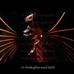 Phuket, Thailand. Lionfish spines. Fuji, 60mm, single str... by Christopher Ward
