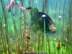 Just snorkeling along slowly looking around and this fell... by Marilyn French