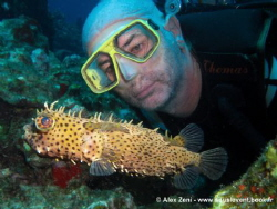 puffer fish with a funny model by Alex Zeni