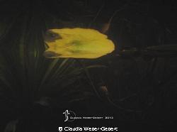 forgotten world.... by Claudia Weber-Gebert