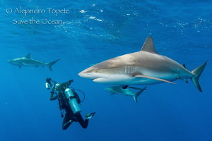 Sharks and Photographers, Gardens of the Queen by Alejandro Topete