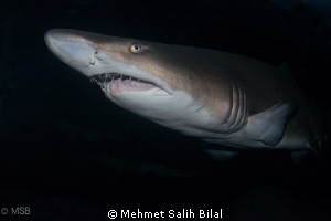 A shark photo using polariser filter from the aquarium in... by Mehmet Salih Bilal
