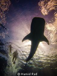 A day at sea. GoPro Hero 3 / flip filter. by Hamid Rad
