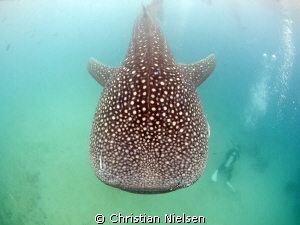 Guess the diver wished he had eyes in his neck. Wonder wh... by Christian Nielsen