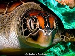 Turtle! by Andrey Savinov