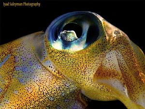Squid by Iyad Suleyman