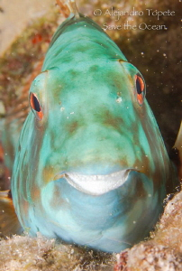 Smile of Parrot, Mahahual Mexico by Alejandro Topete
