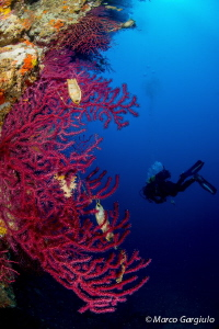 Sea Fan & the Ingeneer by Marco Gargiulo