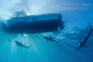 Sharks near Boat with Sunrays, Gardens of the Queen by Alejandro Topete