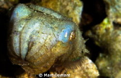 This Cuttlefish was so cute that we had to take a picture! by Marc Damant