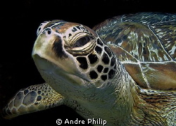 Turtle portrait by Andre Philip